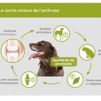 Image arthrose chien 1