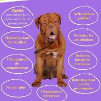 Image arthrose chien 2