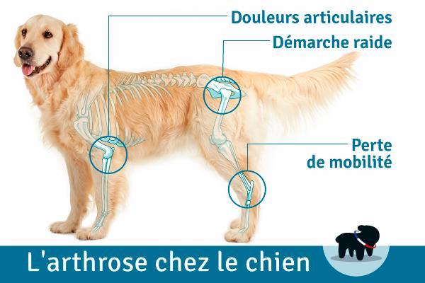 Image arthrose chien