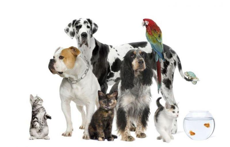 Photo d animaux ensemble